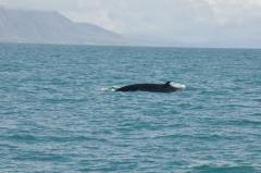 Iceland 2010.