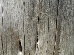 Wooden wall (Sardinia)