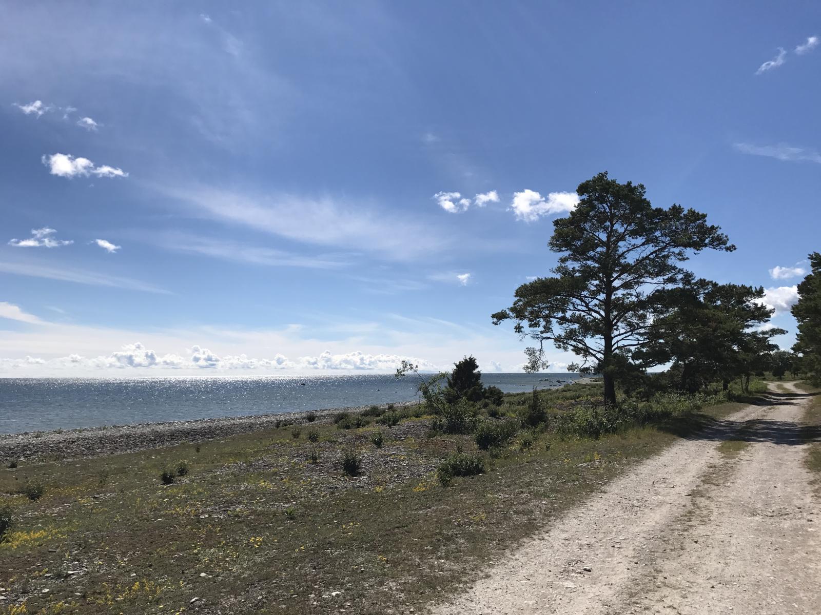 Holiday greeting from Fårö 2017