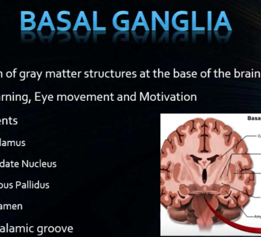 Neonatal Brain Ultrasound - Anatomy and Protocol (part 1 ...